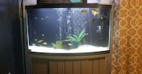 55gallon Bowfront fish tank with stand Severance, 80550