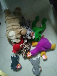 assorted TY beanie baby animal plush toys Lake Orion, 48362
