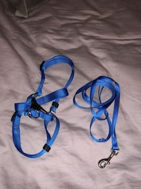 Blue Harness and leash Murphy, 75094