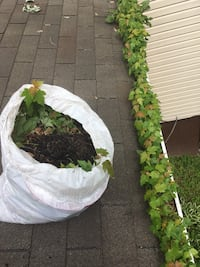 gutter cleaning leaf guards installation reattach and more for a reasonable price $ Glen Burnie