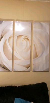 NEW  3 piece white rose picture