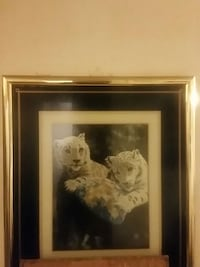 Picture 3d white tigers