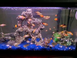 fish tank with all fishes