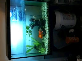 Fish tank + stand + heater + 40 gal filter + decor