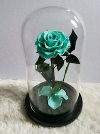 ETERNAL ROSE DOME - BLUE MINT Toronto, M3N