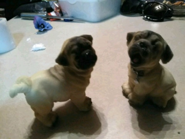 Used Two Black And White Short Coated Puppies For Sale In Las Vegas