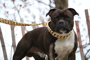 Luxury Pet Collars and Leashes