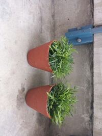 two green leaf potted plants
