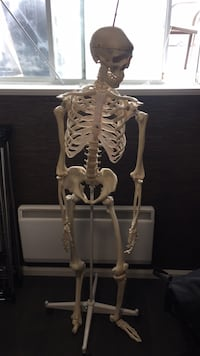 Full size skeleton for home use or medical office   Laval, H7M 4G3