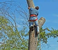 I do Tree Service give me a text Baltimore