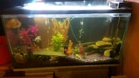 100g Fish tank ,stand and every thing seen  Aurora, L4G 1V2