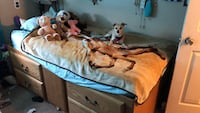 Solid oak twin bed mattress included 4 drawers and 1 space compartment(dog not included lol) Citrus Heights, 95621