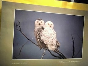 Coolest Looking Northern Hunters Owls Card!