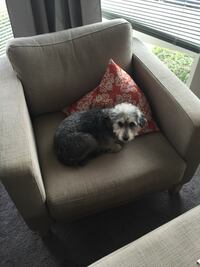 Oversized ikea arm chair + ottoman (dog not included!)