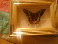 brown wooden frame green and black swallowtail Butterfly