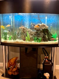 """90 gal Bow fish tank with roughly 20 3""""-6"""" Cichlids"""
