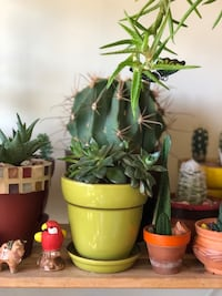 Healthy succulents and Peperomia ! Mississauga, L5N 8R7