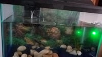 10 gallon fish tank with fish  Lorton