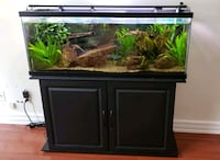Aquarium 50gallon with everything Coquitlam, V3E 3H2