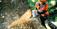 Tree Service Virginia Beach, 23457