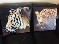 Lion and leopard pictures