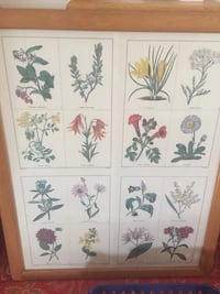 Botanical print framed with oak frame. Measures 20x24. Good condition  Gaithersburg, 20882