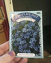 FORGET-ME-NOT Annual Firmament American Seed flowers Fredericksburg, 22407