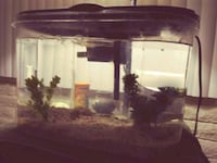 5 gallon fish tank