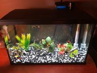 10 Gal Fish tank with filter and all   Milton, L9T 5V4