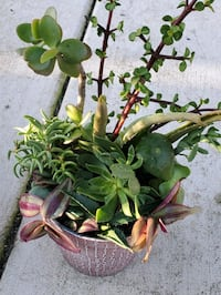 Alot of succulents in this arrangement Chula Vista, 91910