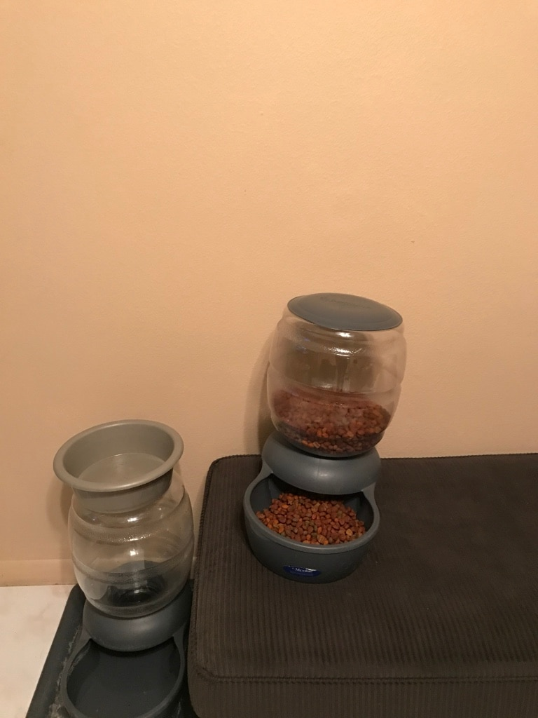 clear and gray pet food dispenser