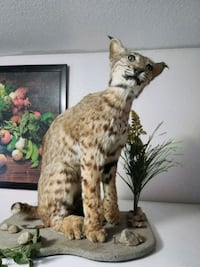 Bobcat Taxidermy Los Angeles, 90033