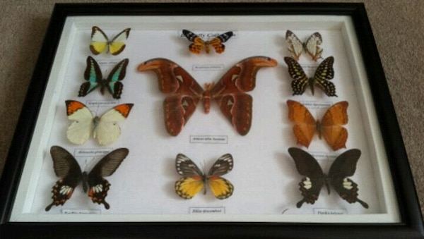 Unique Mounted Butterfly