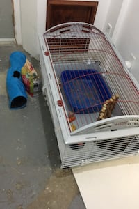 Bunny cage Mississauga, L4W 3P7