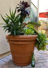 Very large planter with plants