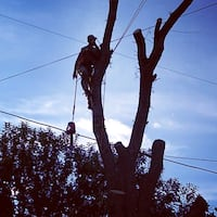 Tree Removal and Tree Trimming West Allis