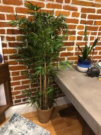 Bamboo houseplant Washington