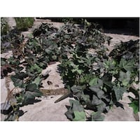Top Quality Decorative Greenery Bushes Hanover