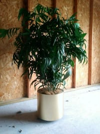 green leaf plant with brown pot Green Bay, 54311