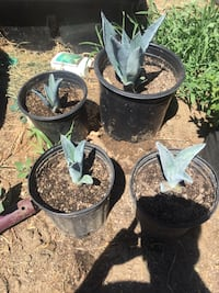 Plants for sell Ceres, 95307