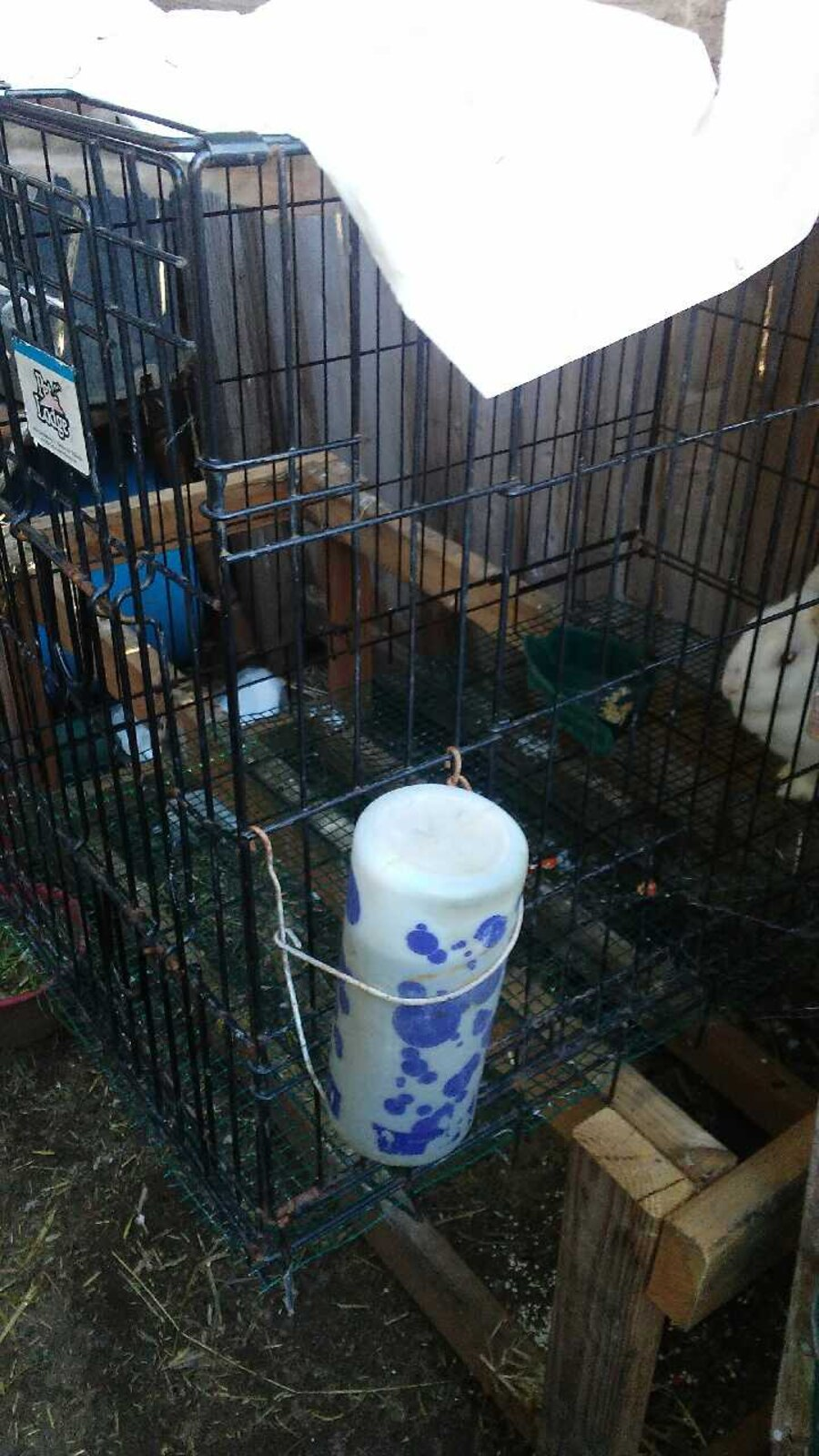 Large kennel  - CA