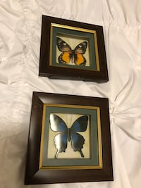 Two wooden framed butterfly pictures  King, L7B