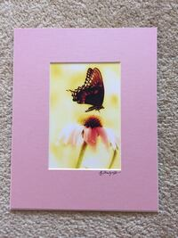 Butterfly image with pink mat Saint Peters, 63376