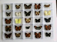 Collection of Butterfly & Moth Specimens Calgary, T2R 0S8