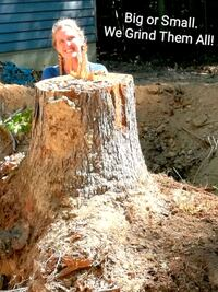 Affordable Stump Grinding and Removal Richmond