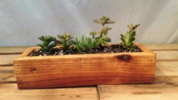 Hand Crafted Wooden Tray with Succulents. Makes a  great  XMAS gift.