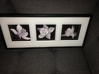 Flower picture frame  Wesley Chapel, 33544