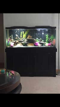 55 Gallon Fish Tank, Stand, Accessories, Fish and Cleaning Supplies Ottawa, K1K 3R9
