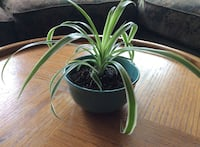 green and white potted plant Appleton, 54911