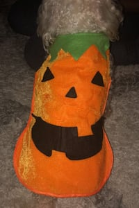 Pumpkin Costume for pets District Heights, 20747